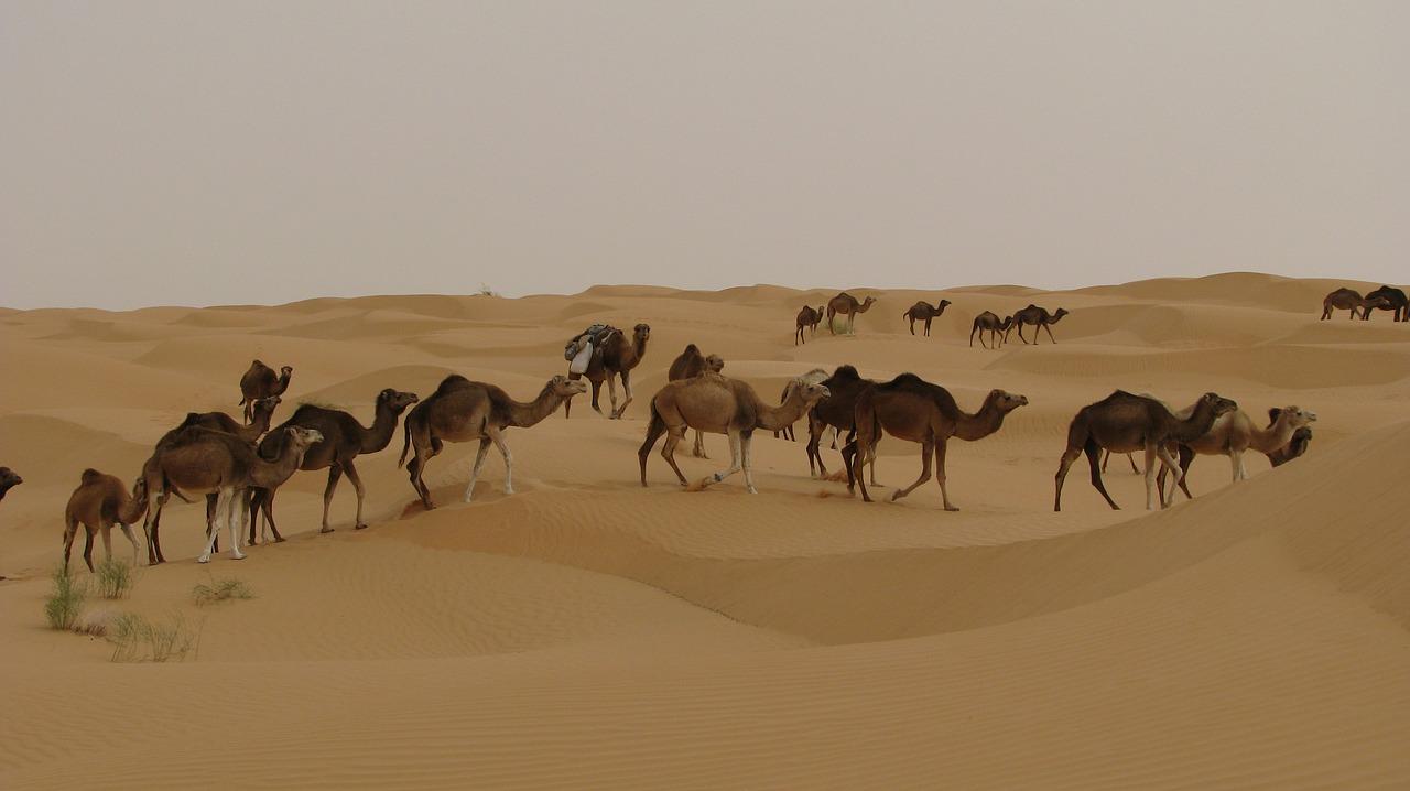 Besoin d'un guide pour la ville de Djerba?