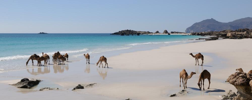 Plage Oman