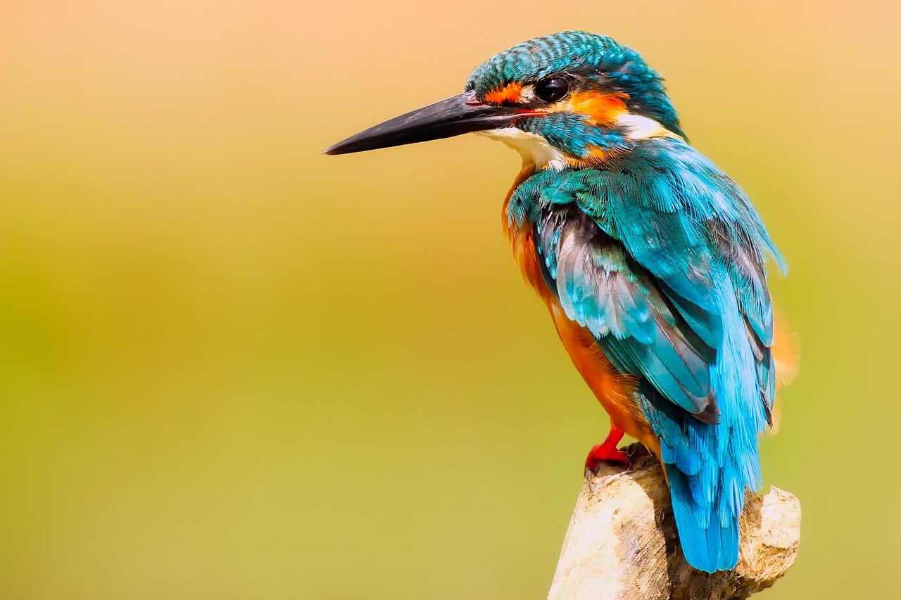 Comment aider les oiseaux en hiver ?